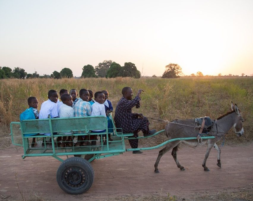 How Donkey 'School Buses' Benefit Early Grade Children in The Gambia